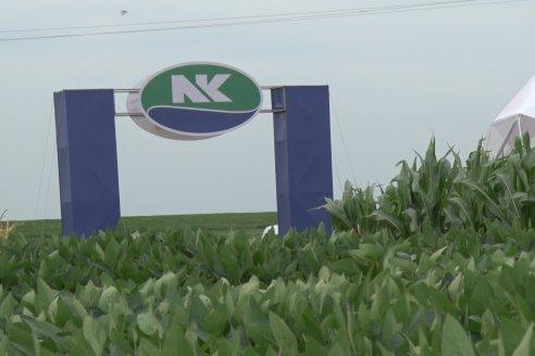 NK semillas realizó el primer