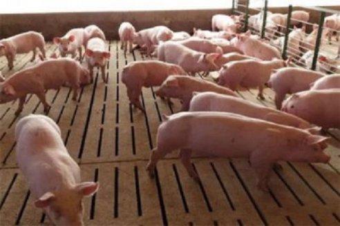 Los márgenes del negocio porcino invitan a la inversión