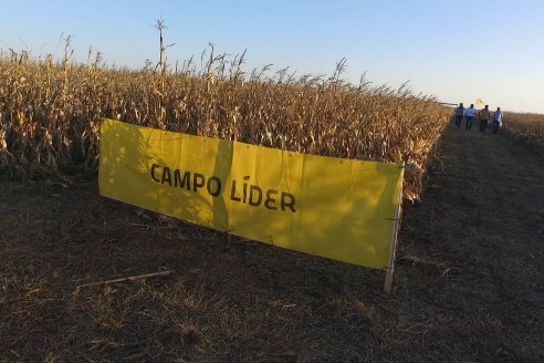 Campo Lider Nidera de La Impronta - Agronomía Pura - El Solar - Departamento La Paz - Entre Ríos