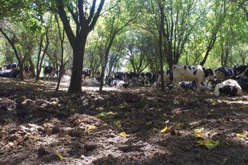 Los Estribos de Gieco: una producción mixta entre lechería y agricultura