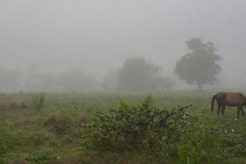 Pronóstico del tiempo: alerta por lluvias y tormentas en la región del Litoral