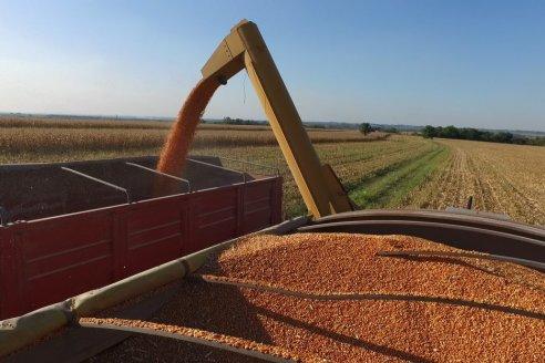 Se estima una producción de maíz de primera de 2.293.000 t