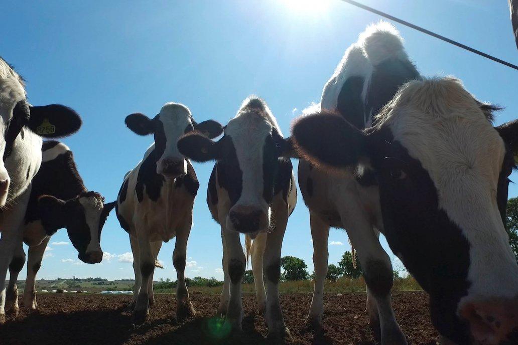 El clima jugó a favor de las lecheras que tienen alimento de sobra.