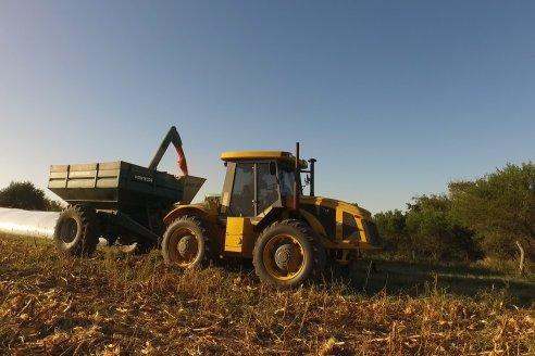 Campaña maicera con rendimientos parejos en la zona de Viale