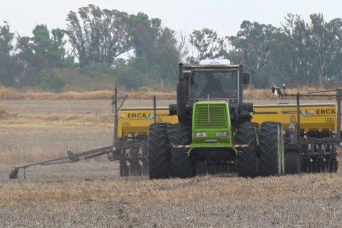 Ya se sembraron alrededor de 310.000 ha de trigo en suelo entrerriano