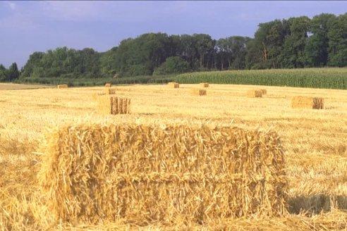 Extienden los plazos de pago del Inmobiliario rural y subrural