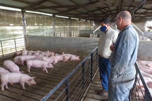 Establecimiento Porcino Don Eduardo, hacedores de madres para granjas entrerrianas