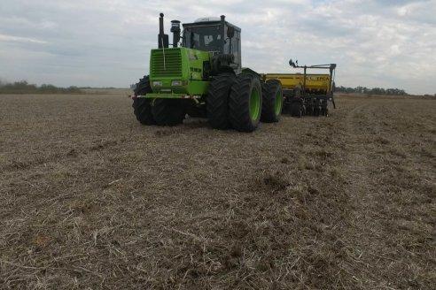La intención de siembra de trigo sería similar al área cultivada en el ciclo pasado