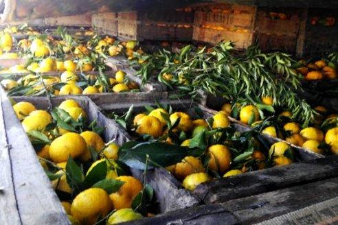 Rechazan cítricos con hoja en el mercado de Mar del Plata provenientes de Entre Ríos