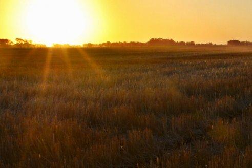 """La tendencia de año """"Niña"""" impactará más sobre los cultivos de verano que sobre los de invierno"""