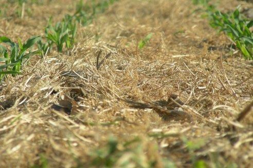 Cómo avanzar hacia una agricultura climáticamente inteligente