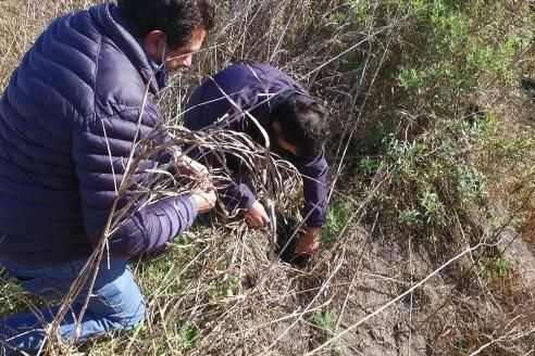 Impacto productivo y ambiental de terrazas en suelos entrerrianos