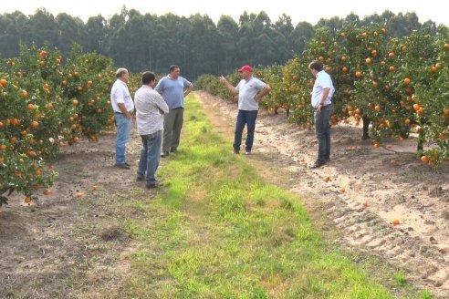 Plan de fertilización foliar en quintas citrícolas de Federación