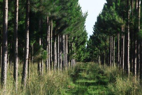 Se otorgaron más de 13 millones de pesos a productores forestales entrerrianos