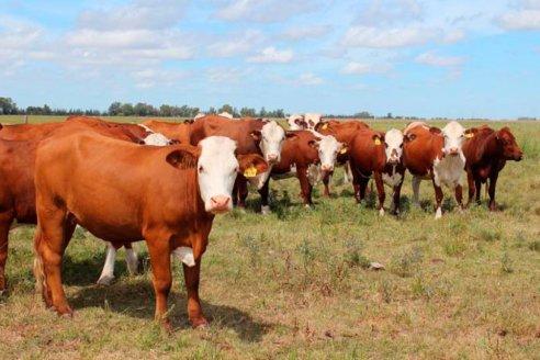 De cada 10 kilos de carne vacuna exportada, 7,5 se enviaron a China