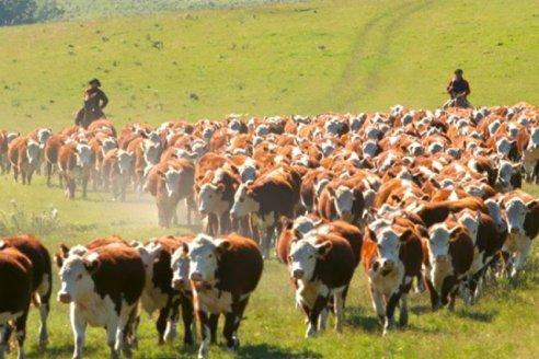 Las exportaciones de carne bajaron, pero en realidad subieron