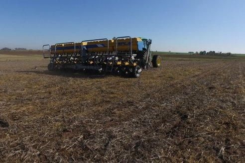 Estiman una baja del 6% en el área sembrada con maíz de primera