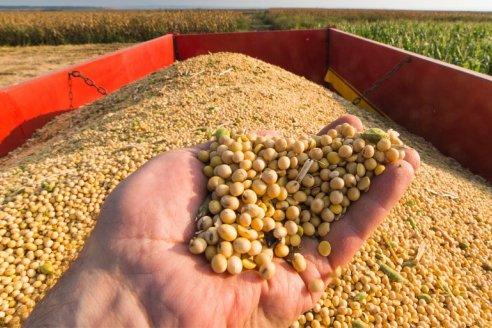 La soja sube sin parar en el mercado de Chicago