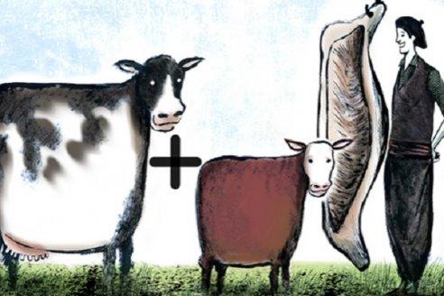 Cruzan Hereford con razas lecheras y obtienen más carne