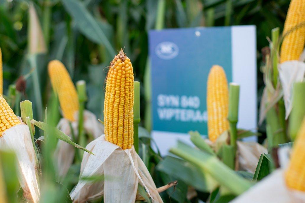 Maíz: Más híbridos de alto potencial y estabilidad para siembras tardías
