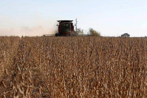 Por baja oferta, la soja ya se cotiza a 525 dólares la tonelada