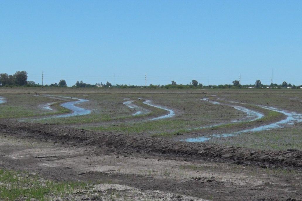 En Proarroz prevén abandono de superficies mayores a las estimadas.