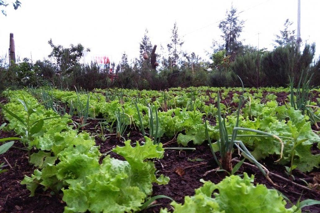 La propuesta de cambio de cultura alimentaria llega a unas 2.000 comunas.