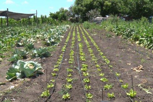 Producciones orgánicas: ¿Cuál es el plan para incentivarla?