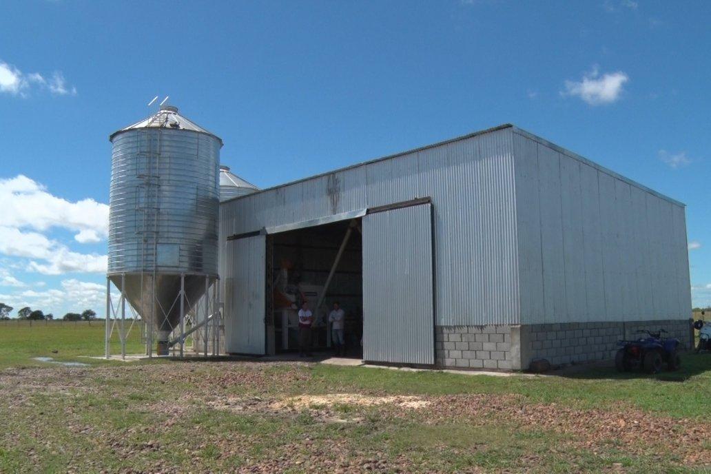 La planta de elaboración de alimentos, dentro de la misma granja.