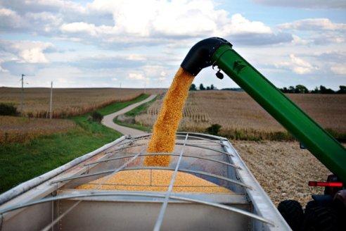 El precio internacional del maíz compensa pérdidas por bajos rindes