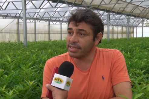 Buenas y malas en los planes de lucha sanitaria de la citricultura