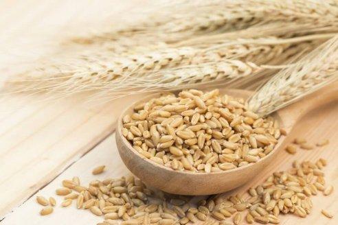 Cultivar más cebada para exportar a China es la nueva propuesta
