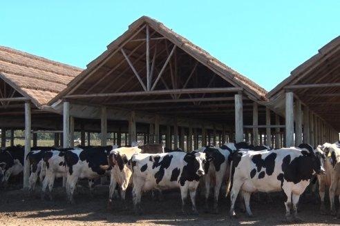 Visita a Estancia TAMA en Camps junto a la gente de DASER AGRO