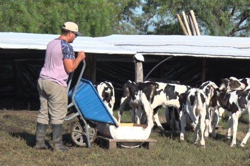 En Estancia Tama son especialistas en lechería y no paran de crecer