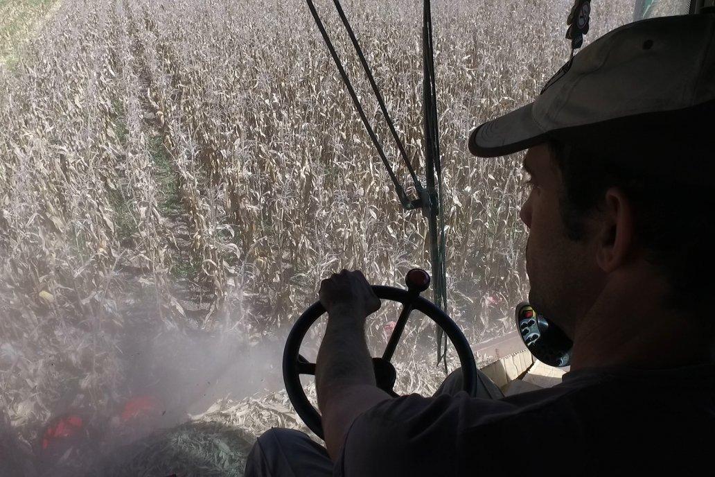 Como siempre, a cosecha se verá si valió la pena el esfuerzo de cultivar maíz.