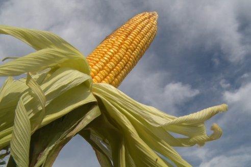 La perspectiva de precios para soja, maíz y trigo se mantiene entonada aquí y en el mundo
