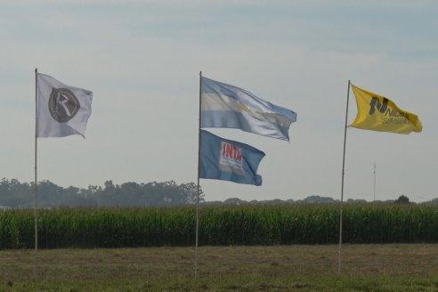 Campo Lider NIdera - Raices del Este SRL - Oro Verde, Entre Ríos