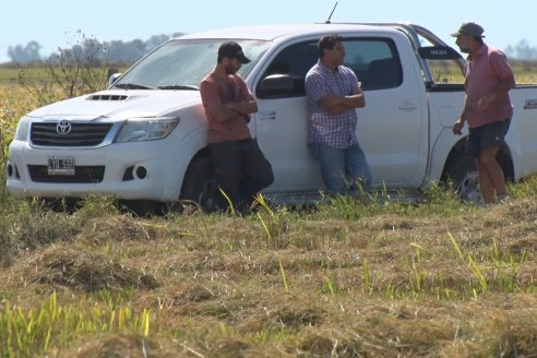 Visita a Establecimiento La Providencia  - Con casi 10 toneladas por hectárea los hermanos Giorgio regresaron a las arroceras