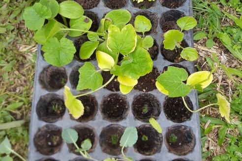 Prácticos tips para armar plantines de flores y hortalizas