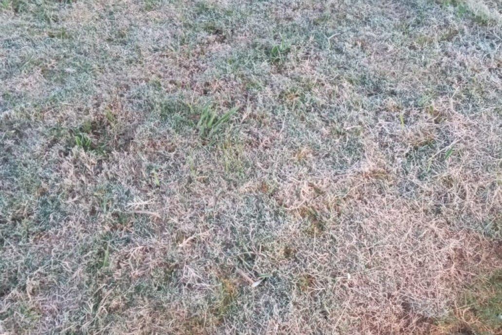 En María Grande el pasto amaneció blanqueado fruto de la baja temperatura.