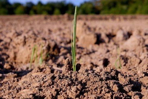 En la Argentina, sólo se repone el 30 % de los nutrientes extraídos