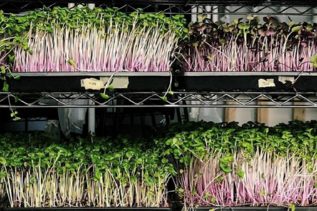 Es posible la autoproducción de germinados y brotes en cualquier hogar.