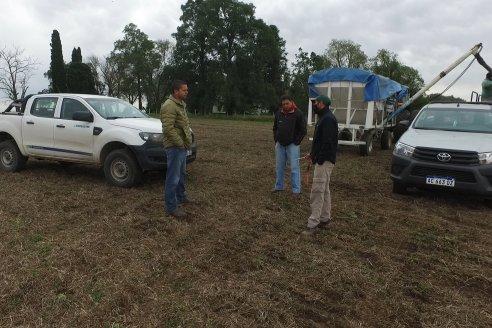 Siembra de Trigo en Victoria - Agrofe Campo