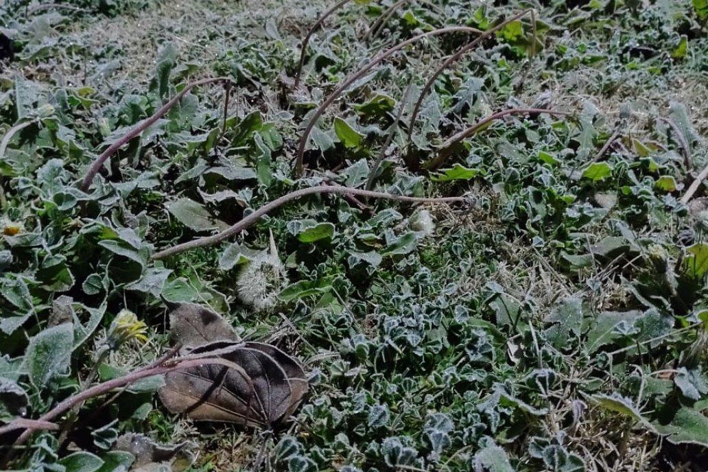 Mañana de sensación térmica bajo cero, el martes, en campos de Tabossi.