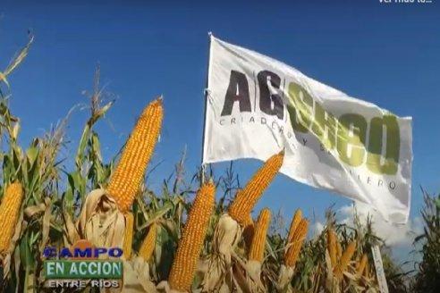 Continúa a buen ritmo la campaña 2021 de los híbridos de AGseed