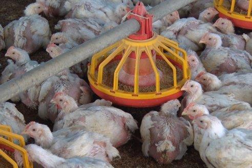 Federación Agraria quiere exportación desregulada