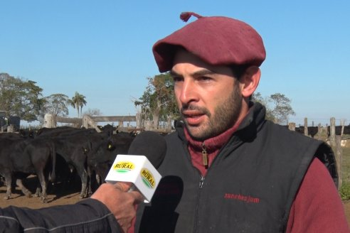 Juan Manuel Sanchez - Estancia La Chica - Preparación de lotes para el remate ENTRE ANGUS en Chajarí