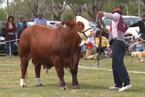 Jura Braford en la Exposición Gandera de la Sociedad Rural de Feliciano 2021
