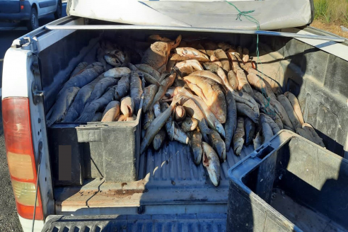 Depredadores atrapados con 600 kilos de pescado en una pick up