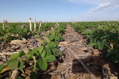 Está confirmado que la Niña estresará a los cultivos de verano